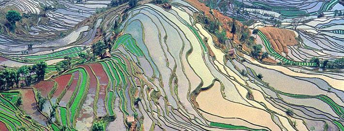 Økologisk proteinpulver baseret på ris og mælk